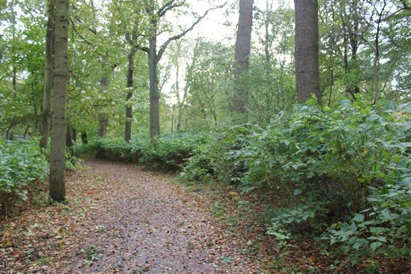 Raad steunt Aanpak Scheveningse Bosjes en Westbroekpark